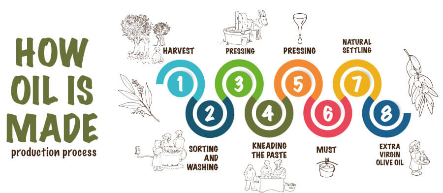 olive oil production process infographic